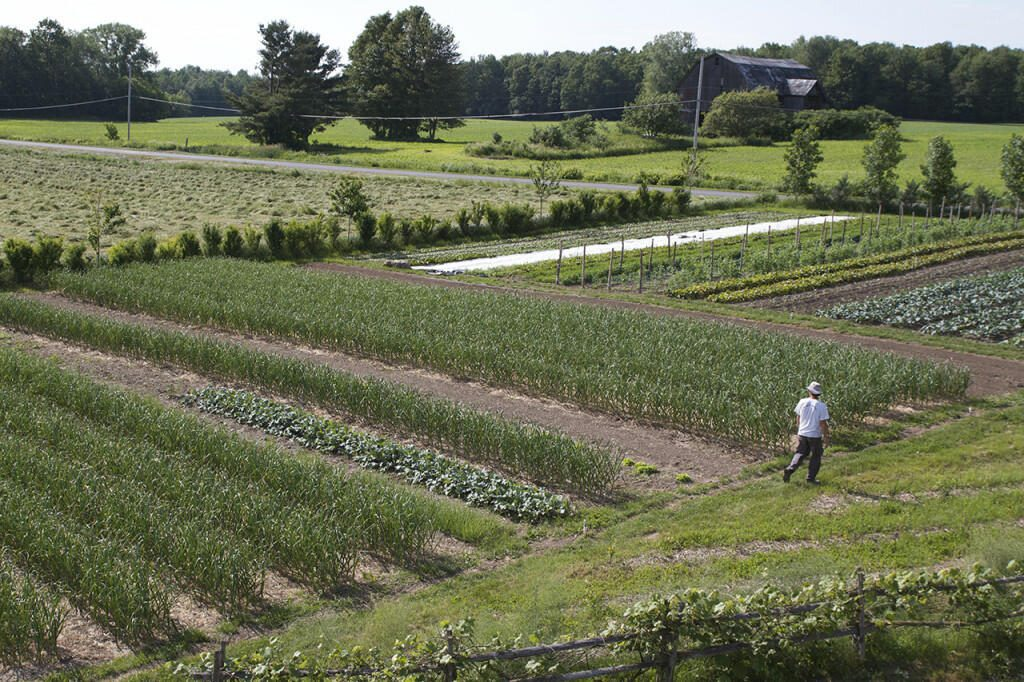 How to make a living from a 1 5 acre market garden 1 acre farm layout
