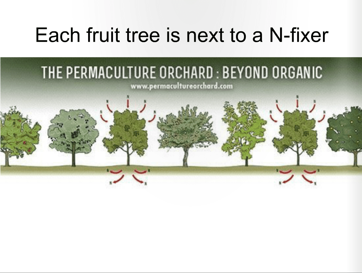 Here is How You Make a Living From a 4 acre Permaculture Orchard ...