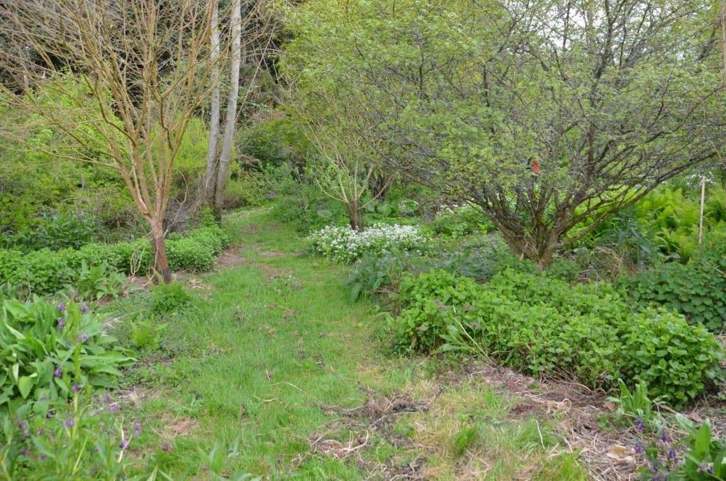 Martin Crawford's garden 150dpi
