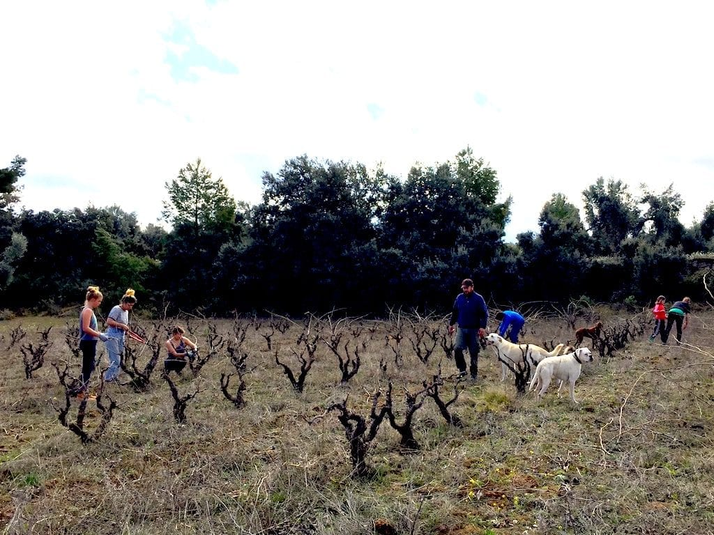 Esmee, Rayna and Alta from the US learned how to prune vines with us