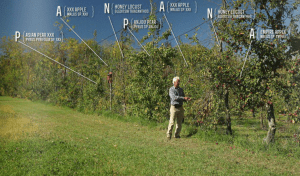 Here is How You Make a Living From a 4 acre Permaculture Orchard
