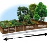 The Definitive Guide to Building Deep Rich Soils by Imitating Nature
