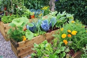 Permaculture can be Profitable! Finding Buyers for your Products: Guest Post