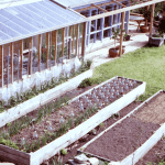 How to choose the best location for your crisis garden (site assessment guide)