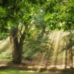 Living a Life of Abundance (Despite the Global Chaos)